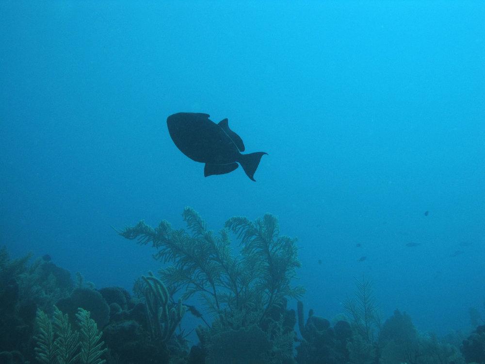 lonely fish 2.jpg