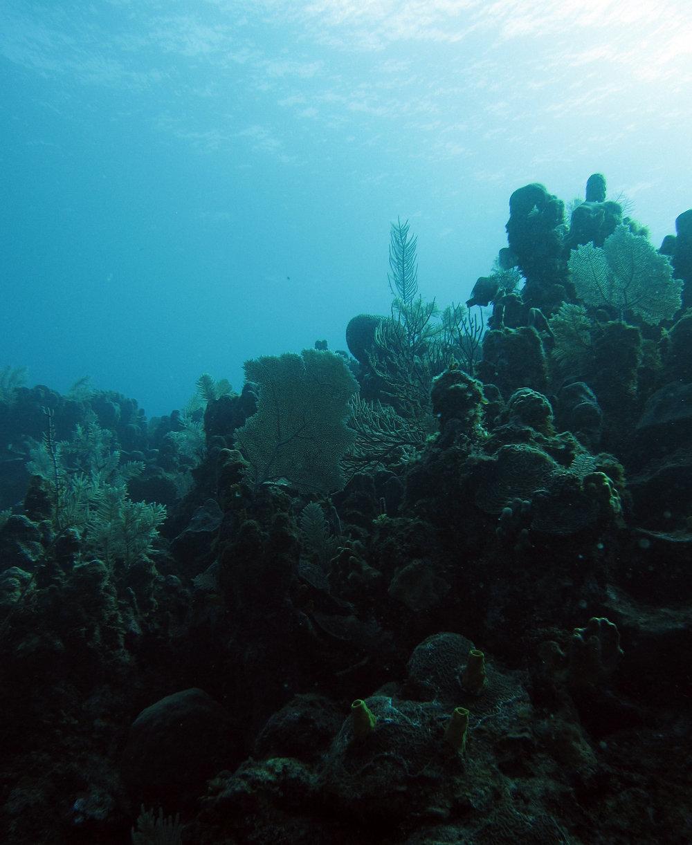 beautiful Roatan seascape.jpg