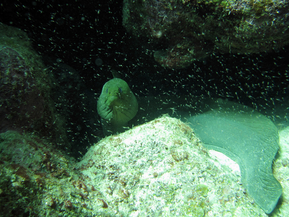 another great moray shot.jpg