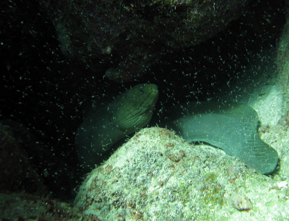 cave moray.jpg