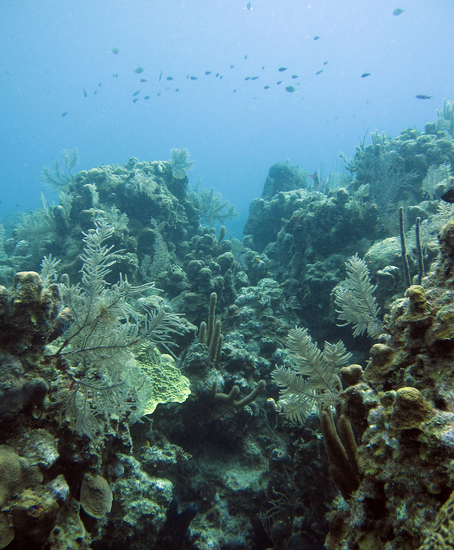 Mesoamerican barrier reef.jpg