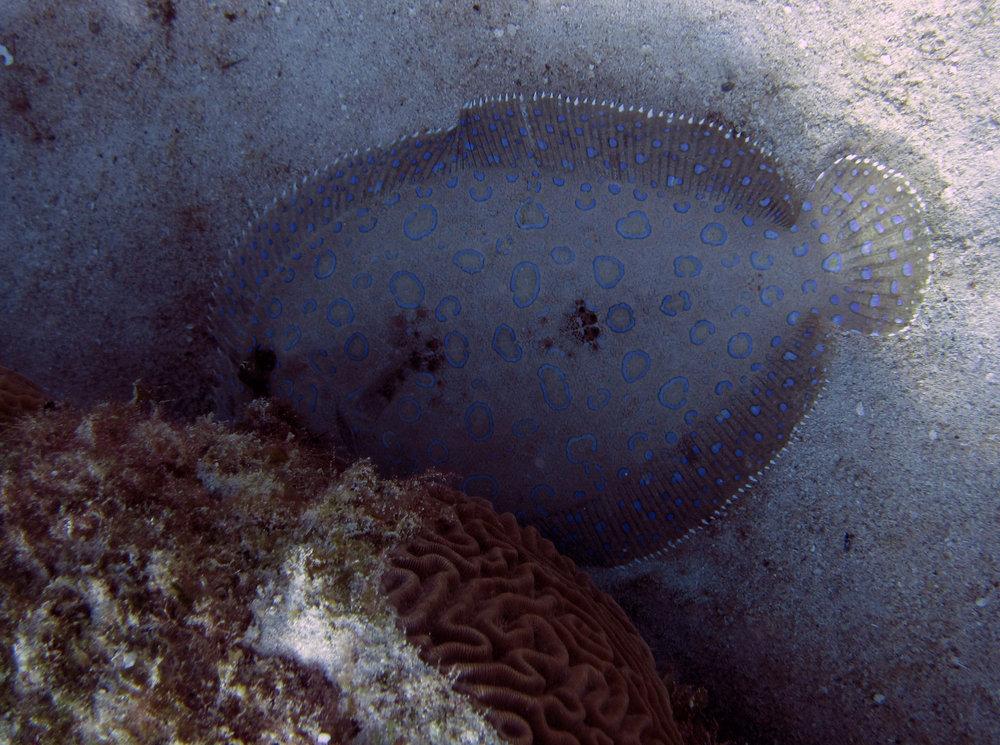 sneaky flounder.jpg