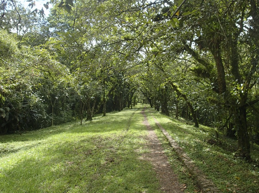 the walk to the archaeological park.jpg