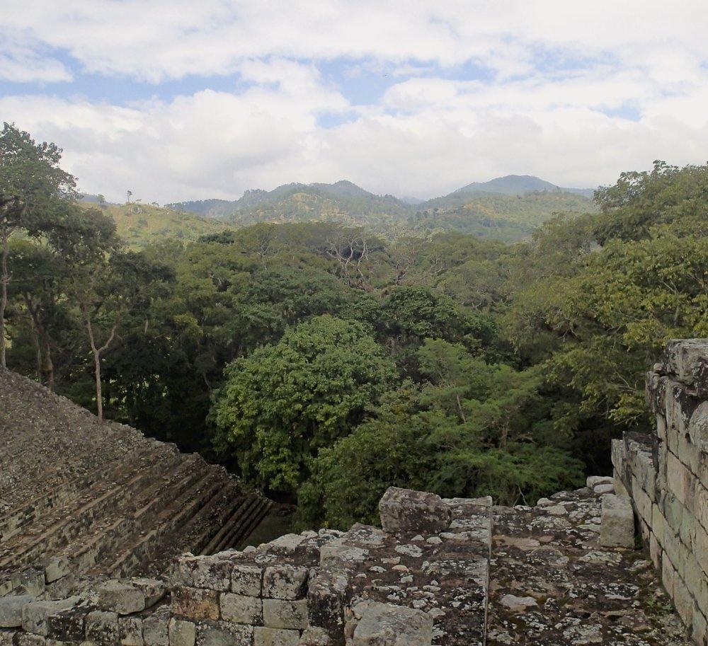 jungle enshrouded ruins.jpg