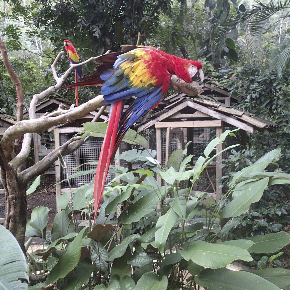 tired macaw.jpg