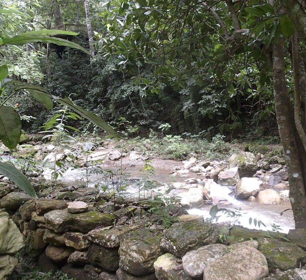 jungle outside of Copan Ruinas.jpg