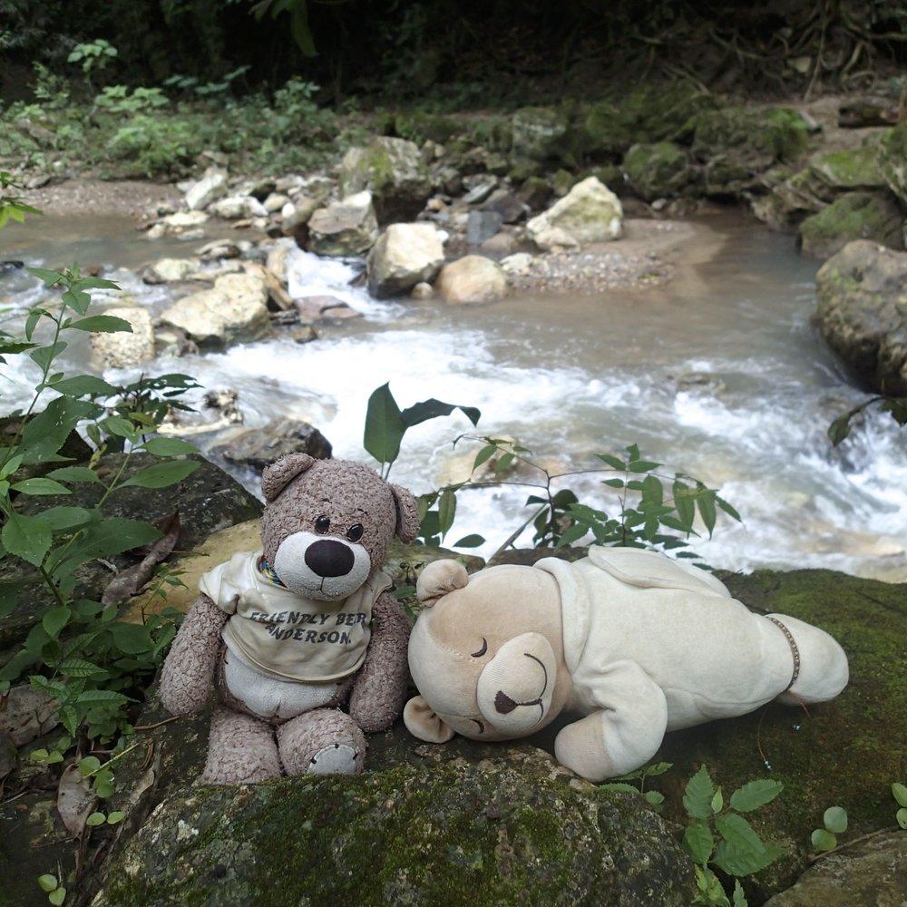 Bearbies at Macaw Mountain.jpg