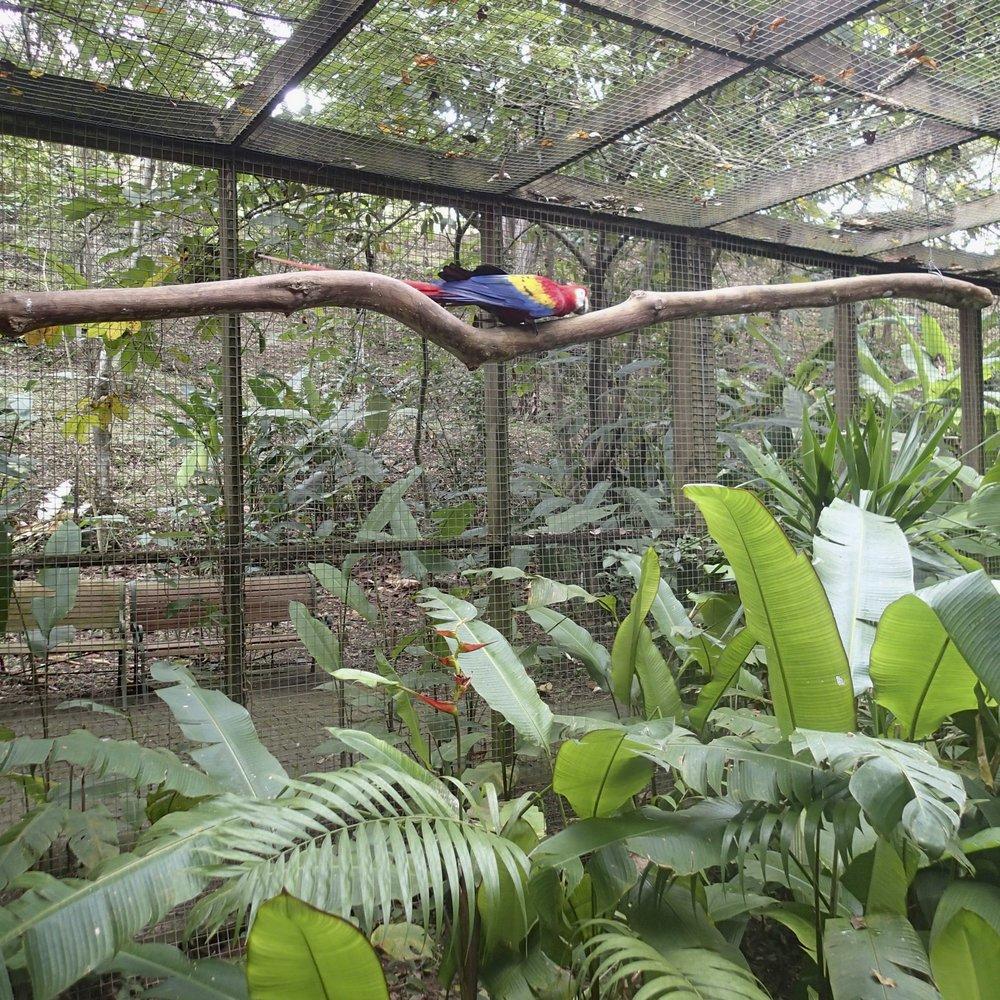 Macaw Mountain 12-29-13.jpg