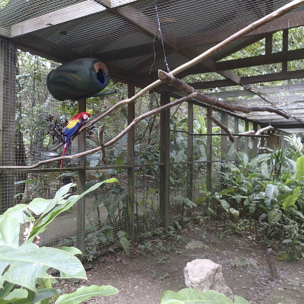 Macaw sanctuary.jpg