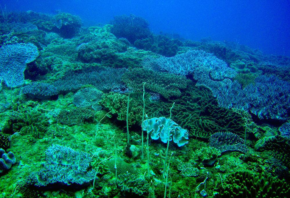 soft coral haven.jpg