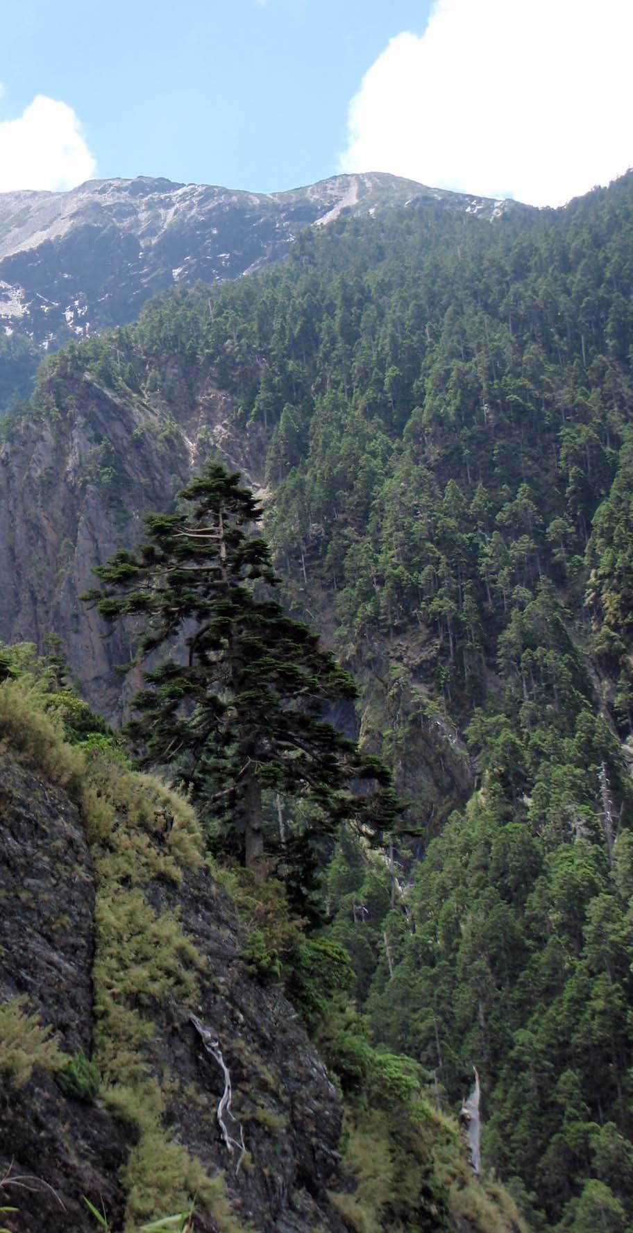 Yushan National Park 10.jpg