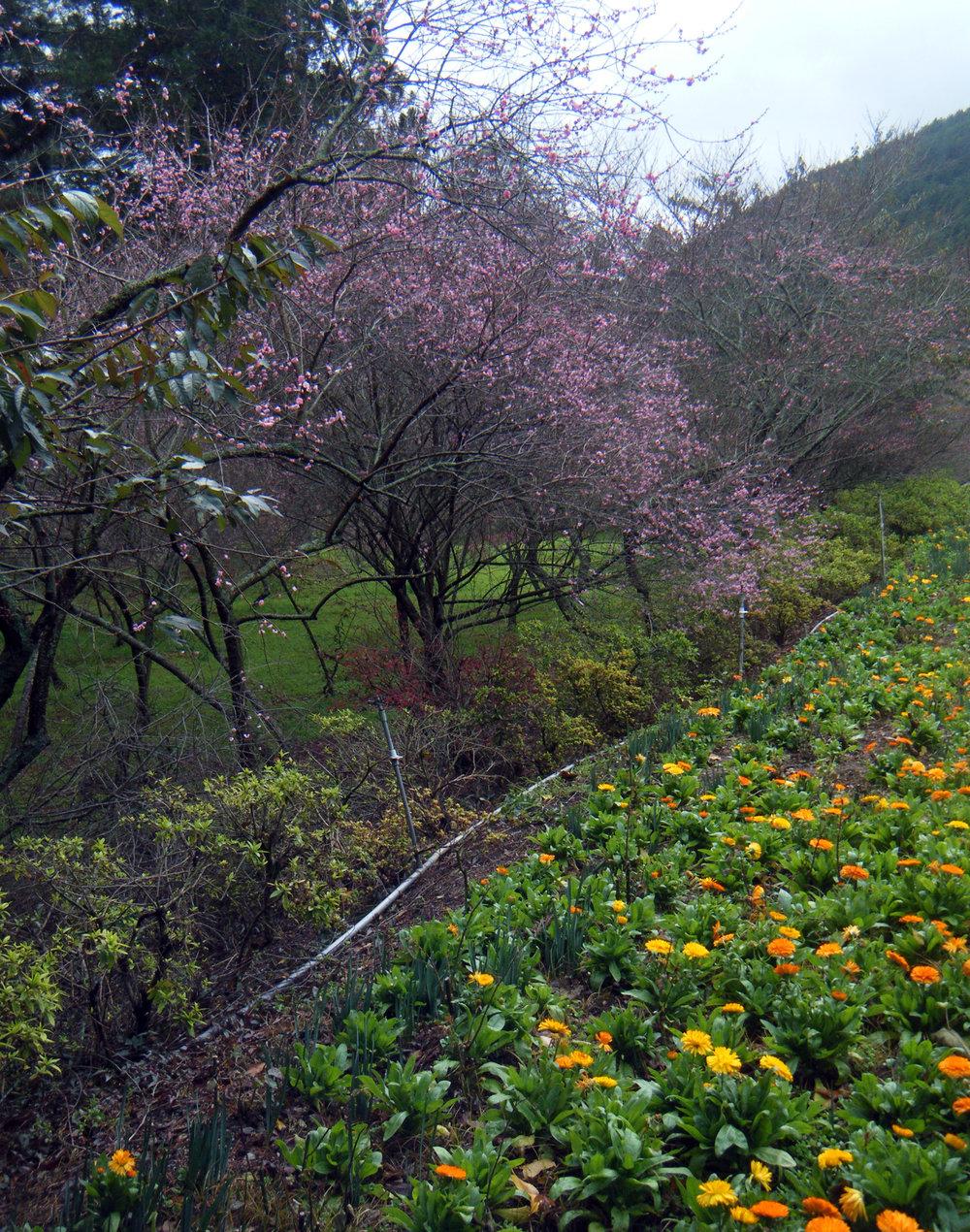 Wuling gardens.jpg