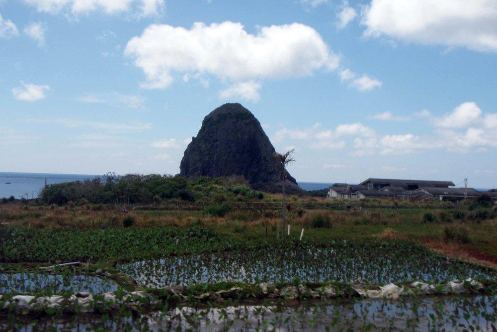 Orchid Island taro farm.jpg