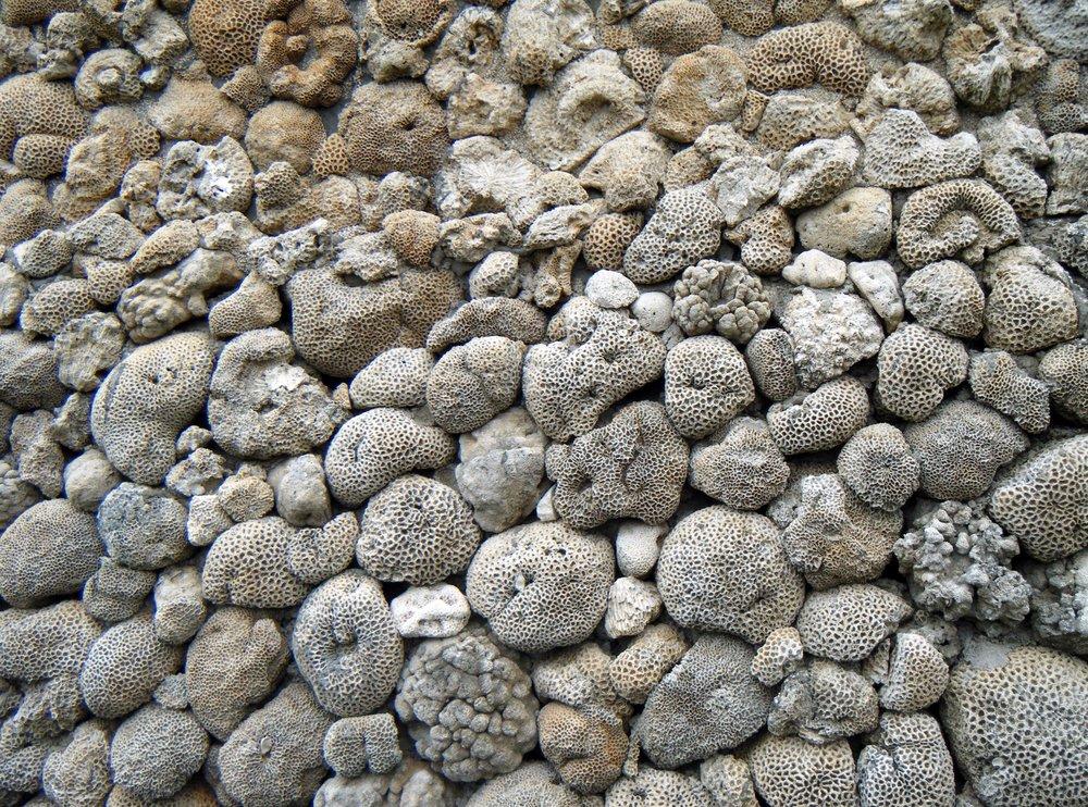 coral wall 2.jpg