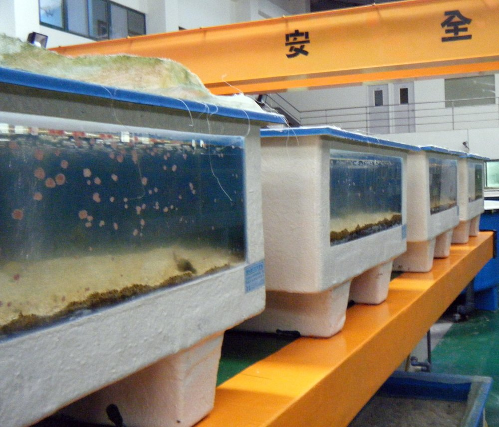 Penghu mariculture facility.jpg