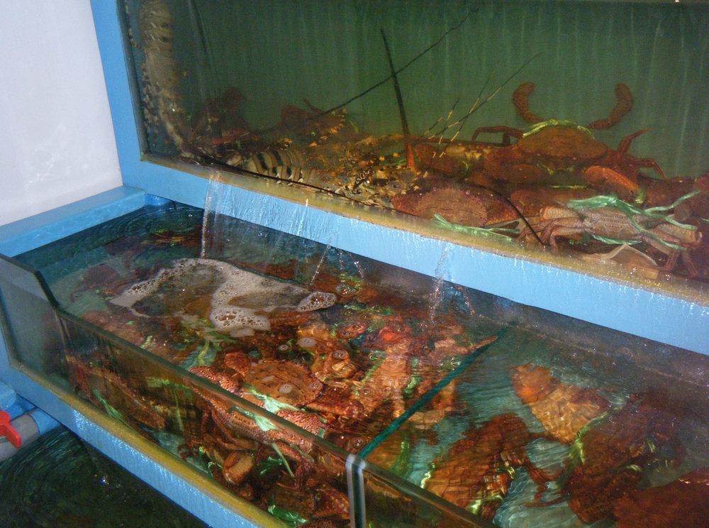Kaohsiung crustacean pen.jpg