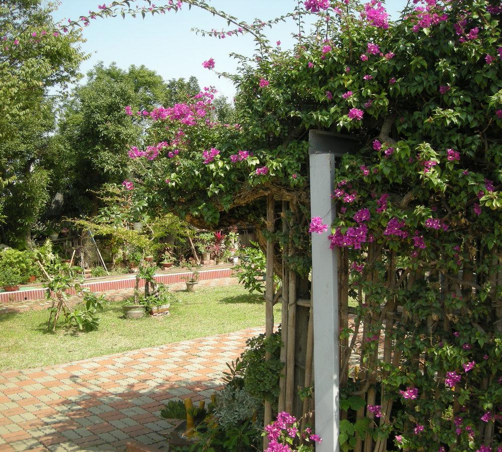Taoist garden 2-14-10.jpg