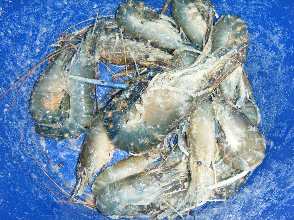 salted shrimp bucket.jpg