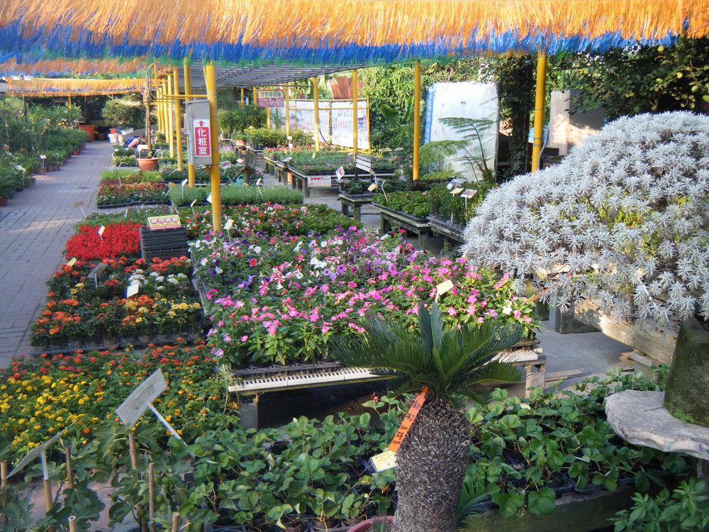 Tienwei flower market.jpg