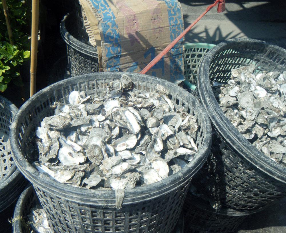 oyster bins.jpg