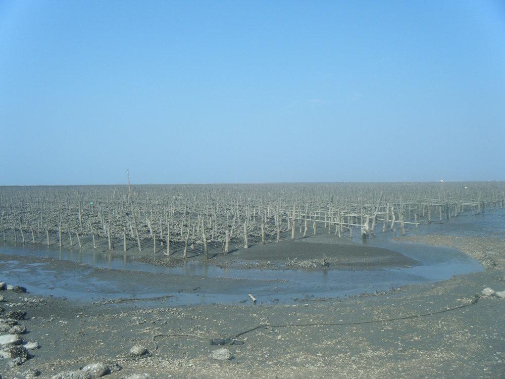 oyster fields 10-22-11.jpg