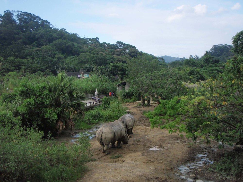 Africa in Taipei.jpg