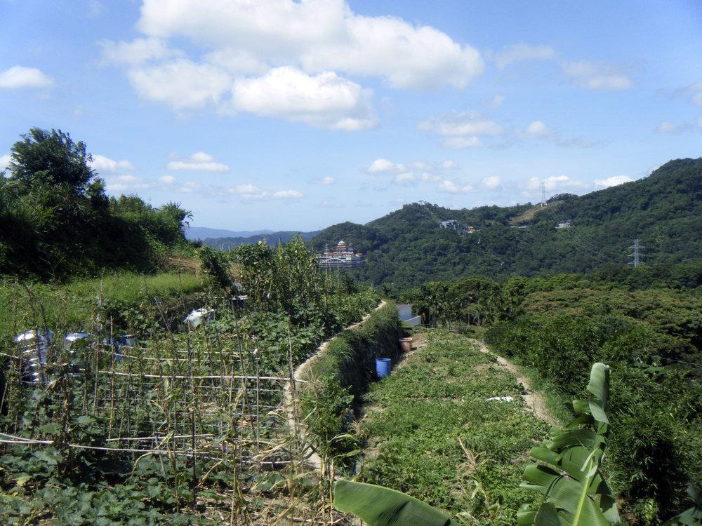 Maokong tea fields.jpg
