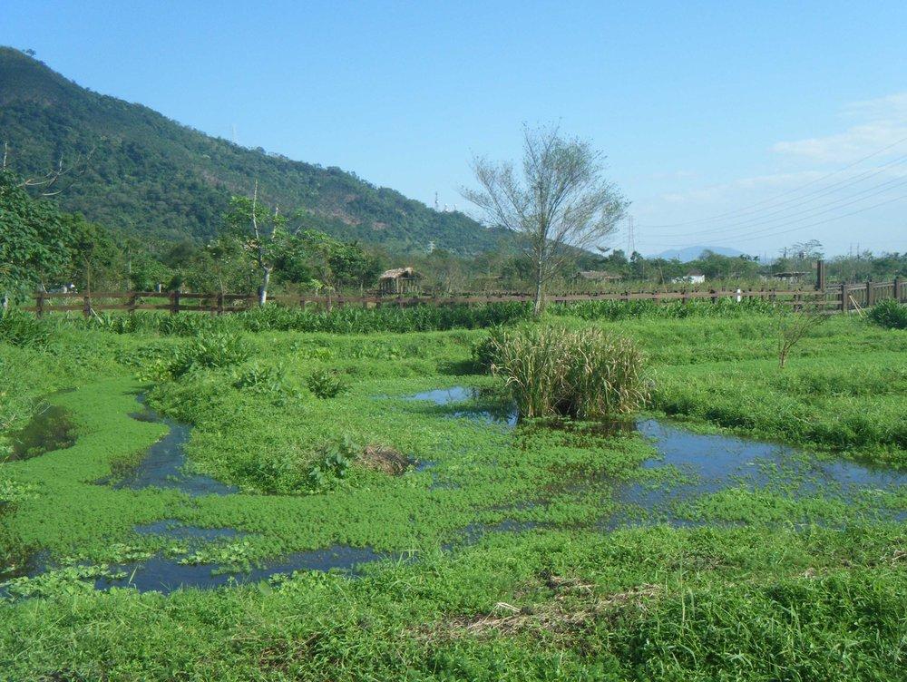 Mataian wetlands.jpg