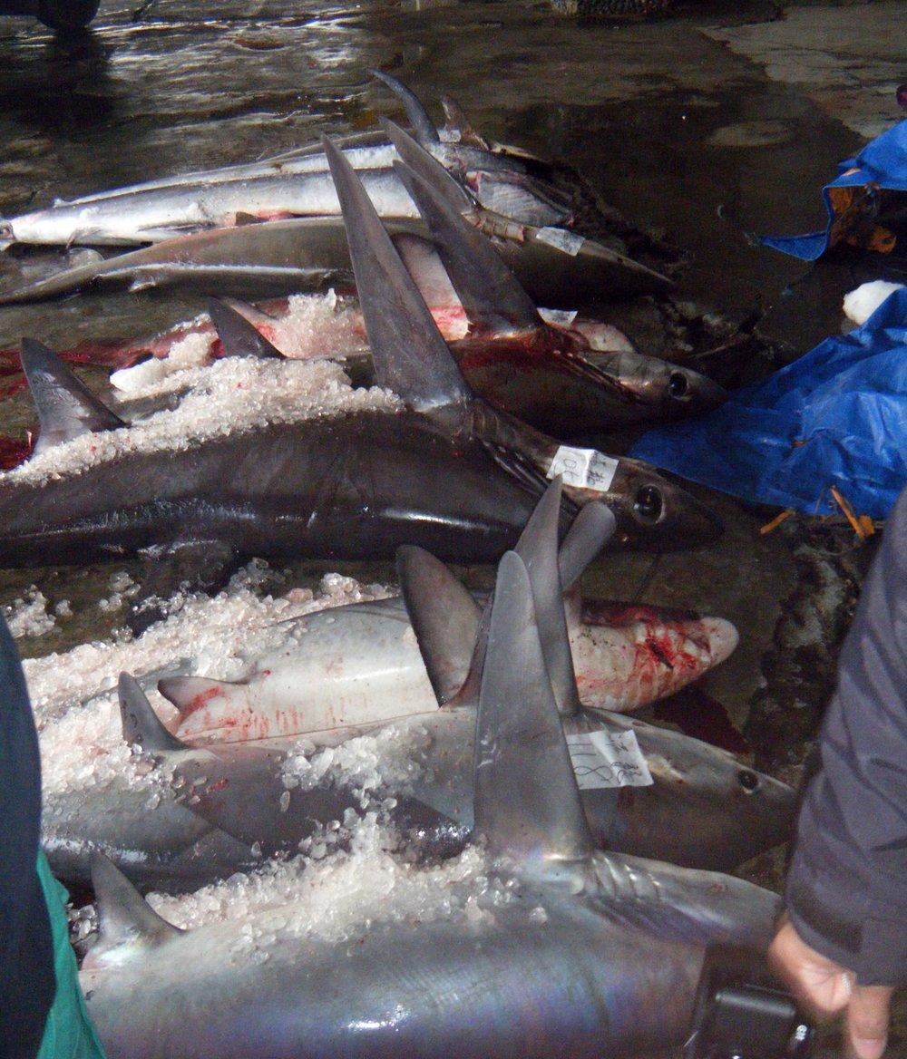 shark market.jpg