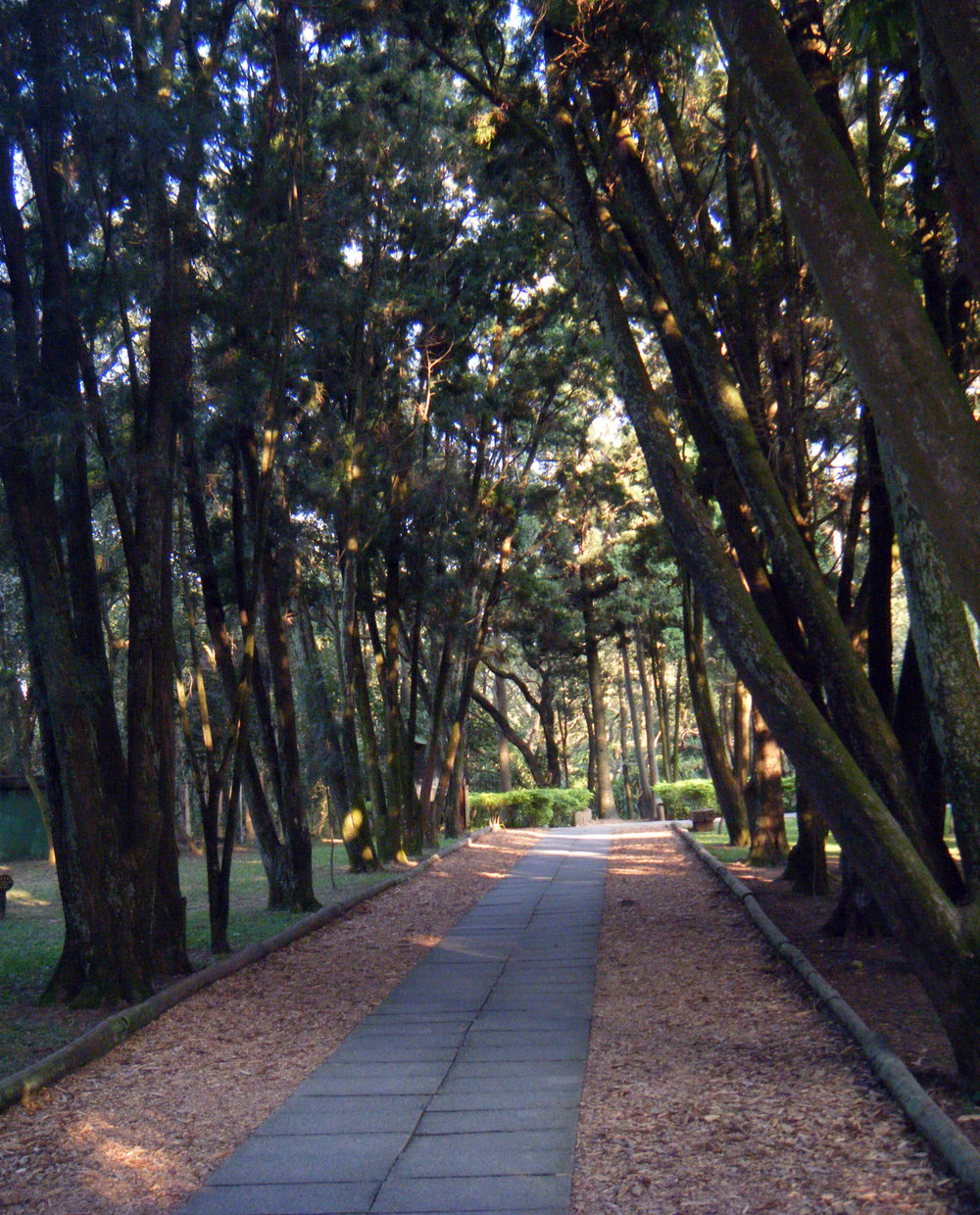 National Taiwan University research forest.jpg