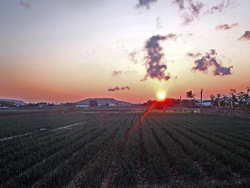 onion farm sunset.jpg