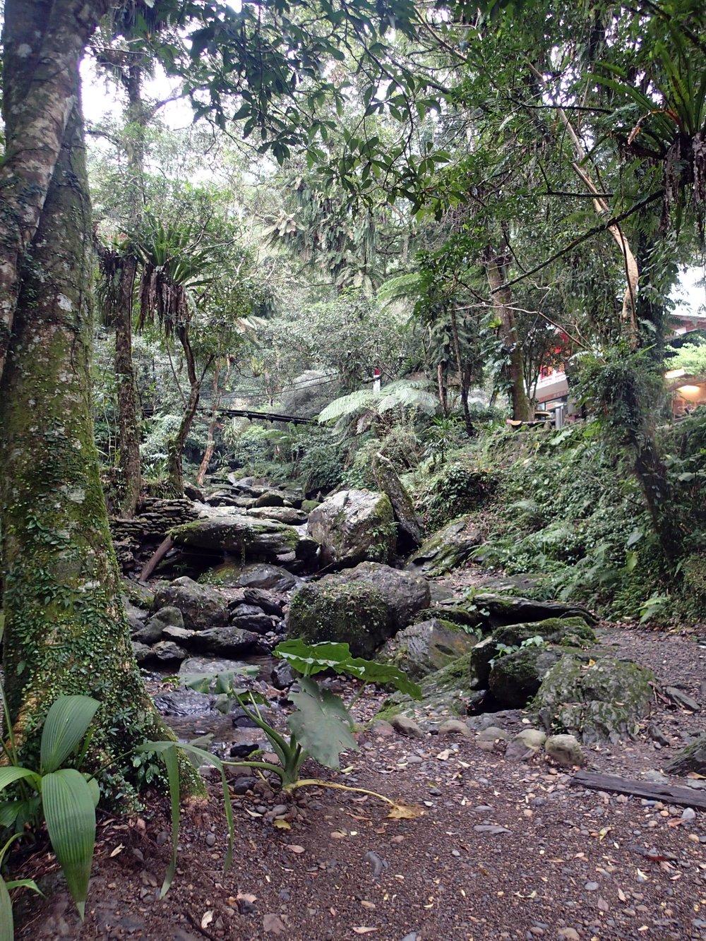 jungle around Wulai.jpg