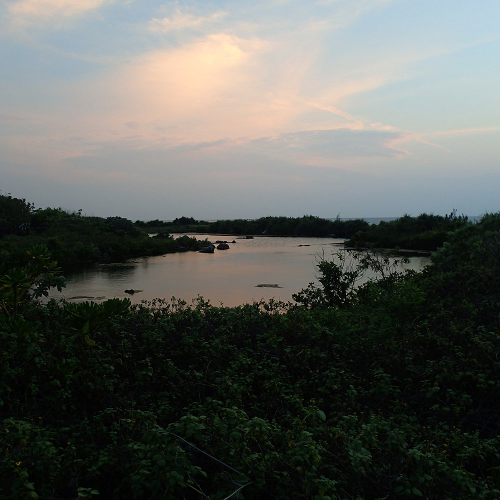 NMMBA artificial wetland.jpg