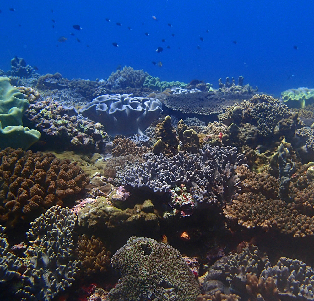 great outer reef shot.jpg