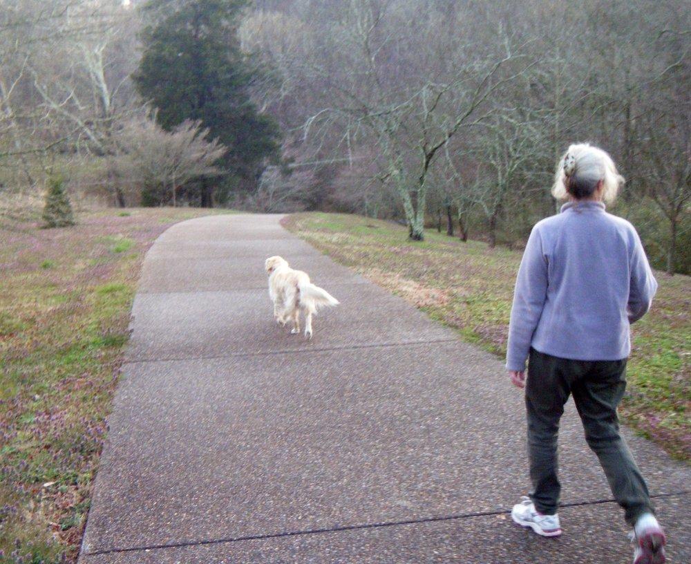 Daisy leads a walk.jpg