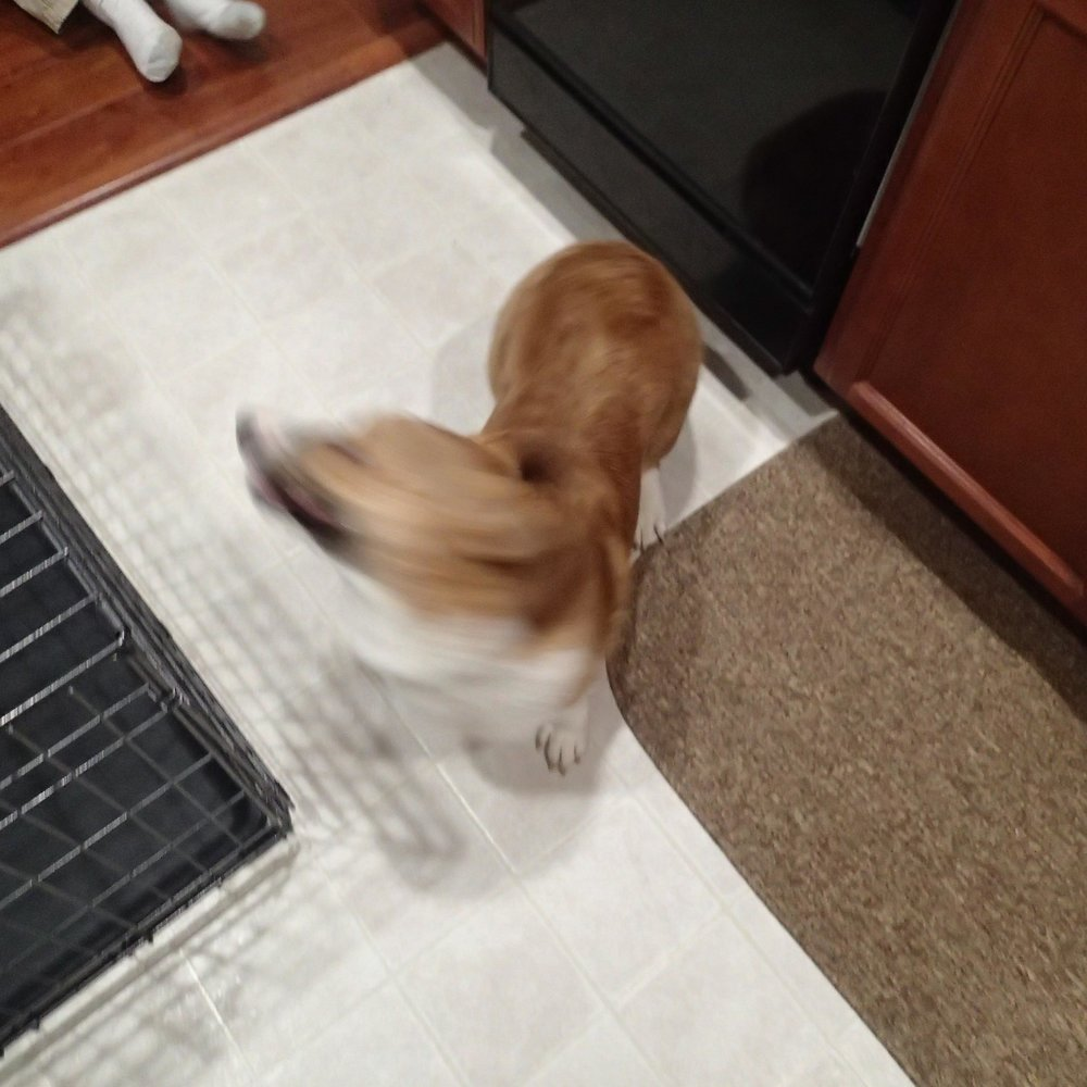 Bowser blur.jpg