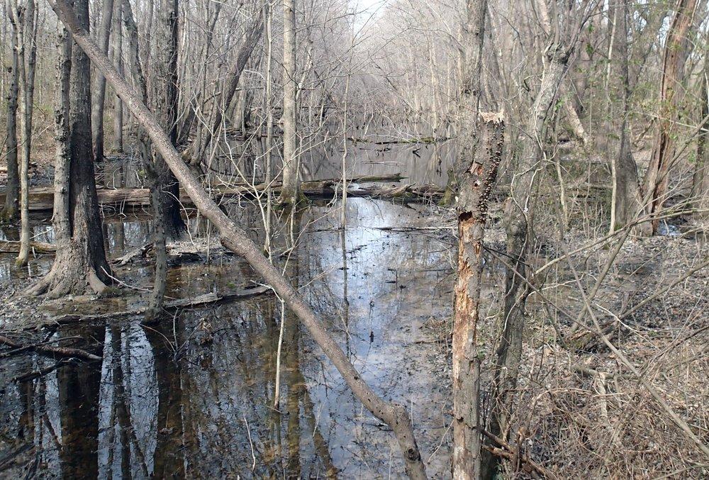 swamp in Nashville?.jpg