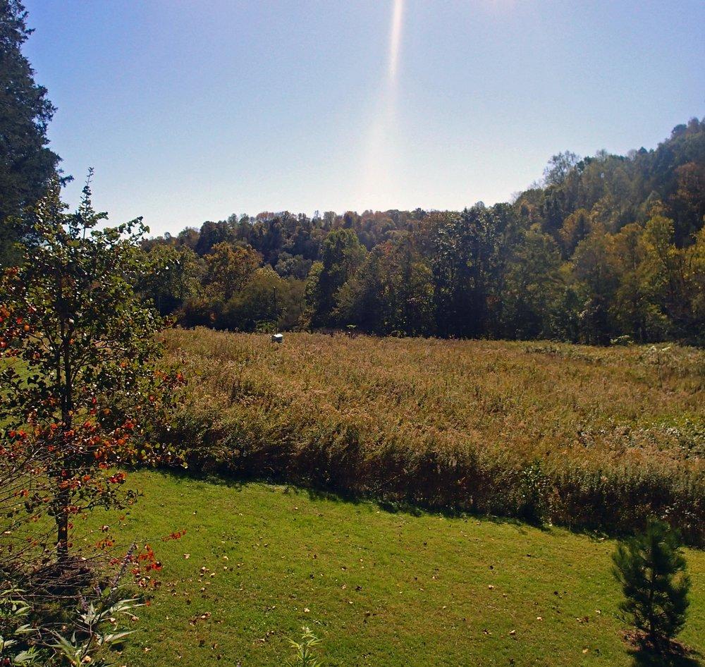 Fall in Goodlettsville.jpg