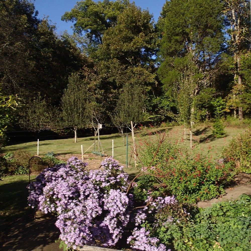 mom's gardens.jpg