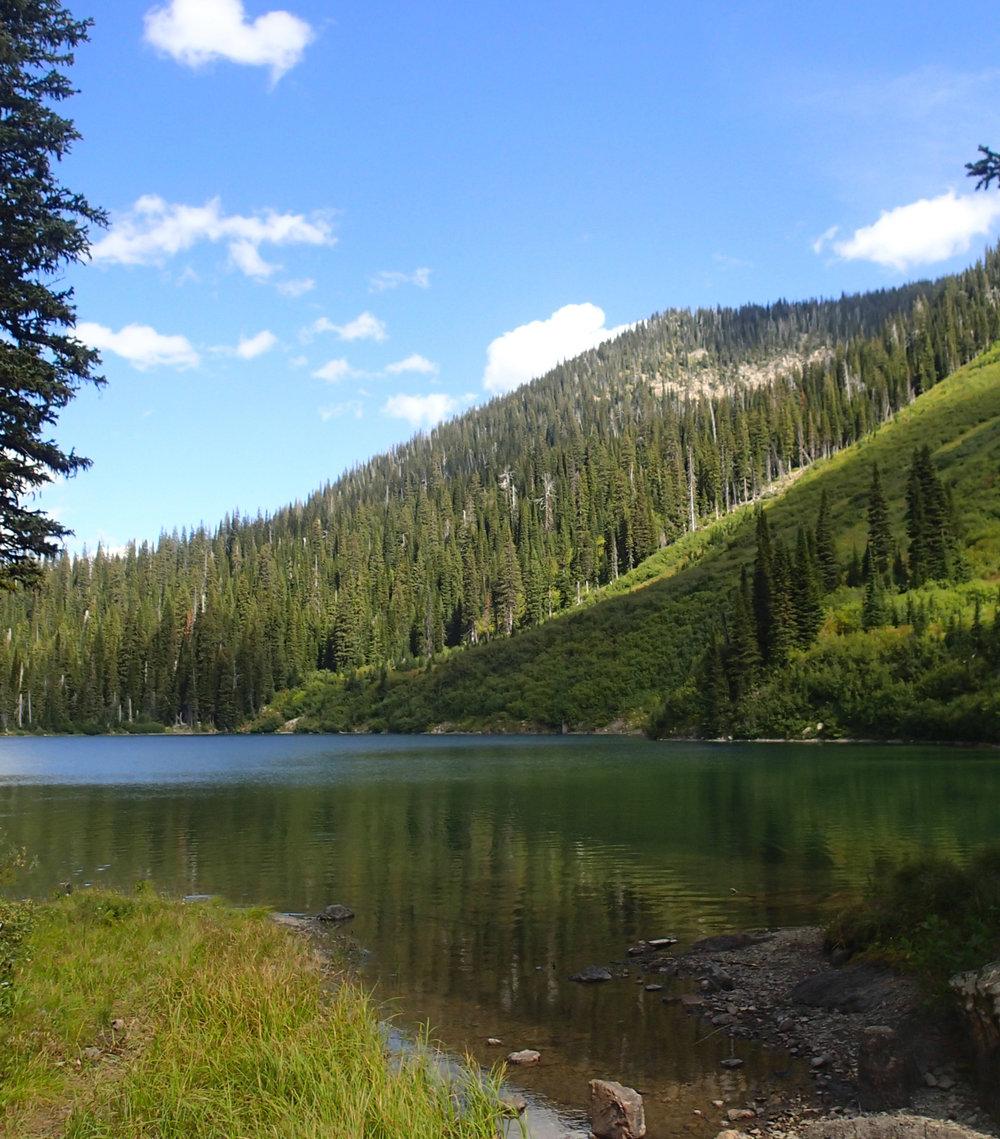 Flathead National Forest.jpg