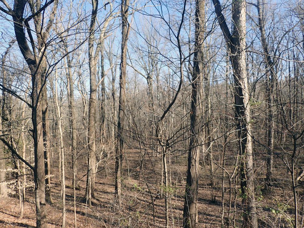 Kentucky woods.jpg
