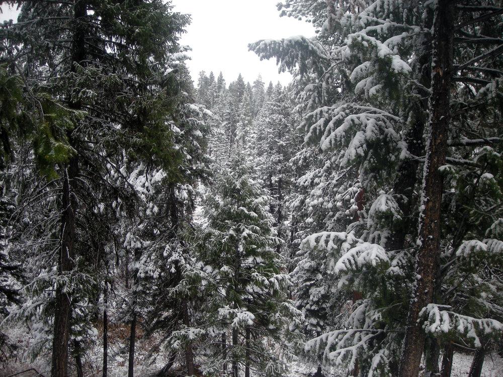 1st day in Oregon.jpg