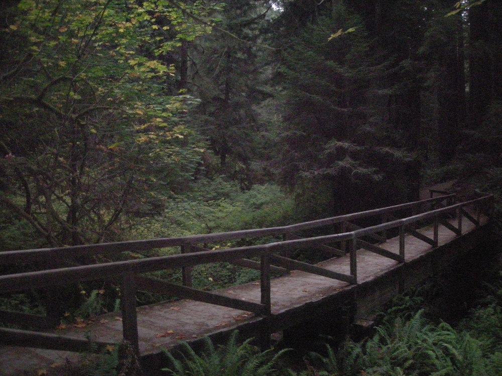 NorCal forest.jpg