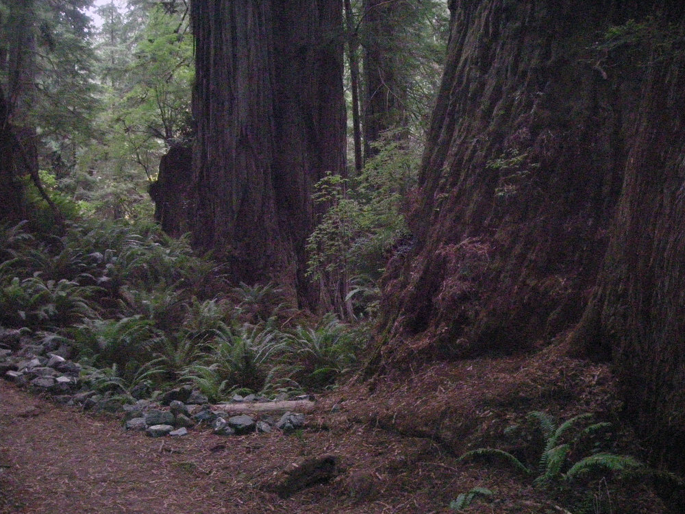 Redwoods National Park.jpg