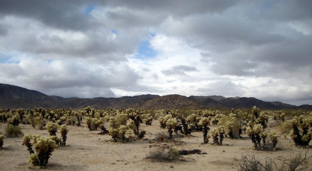 Chollu cactus garden.jpg