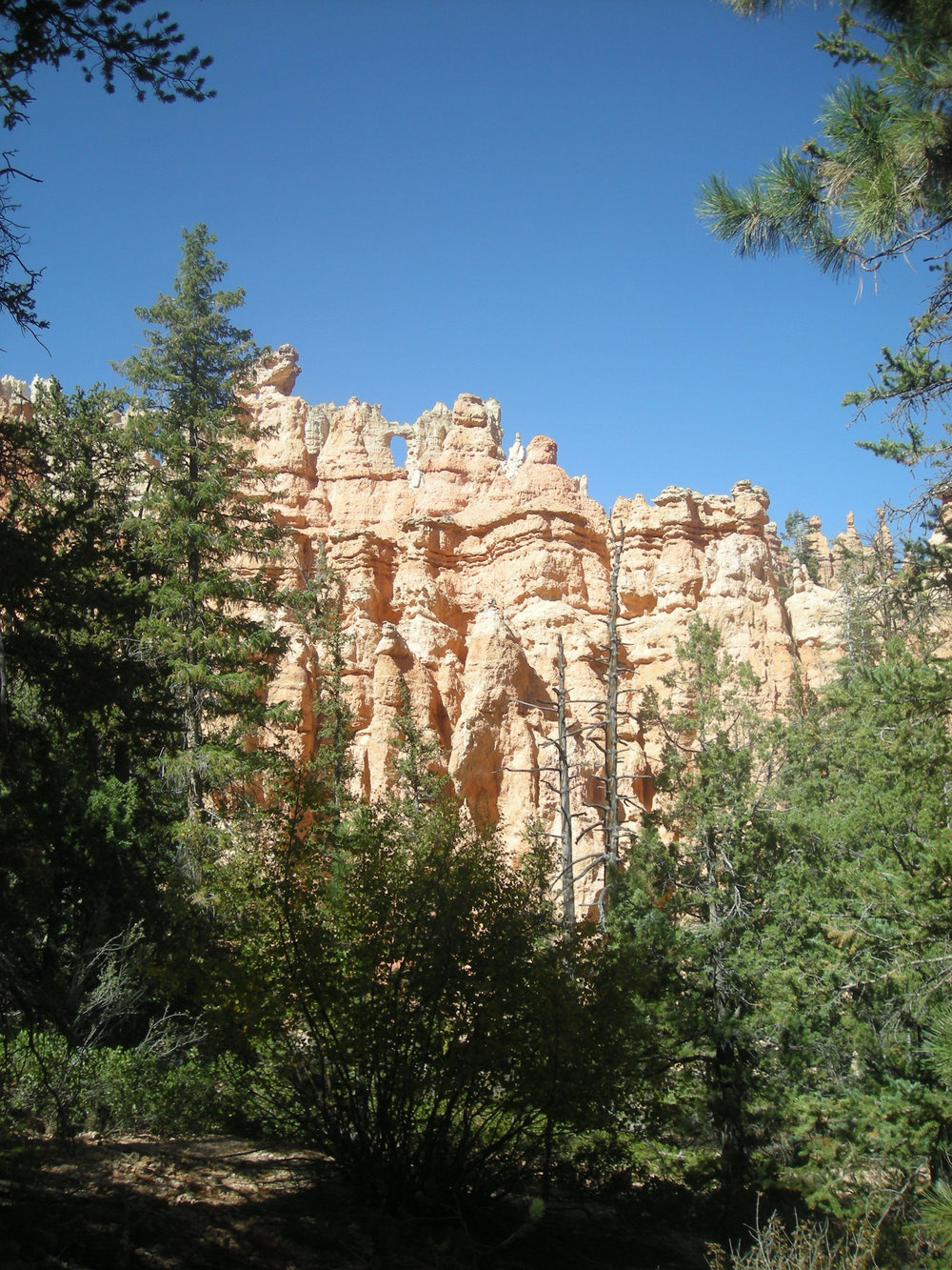 hoodoos through the trees.jpg
