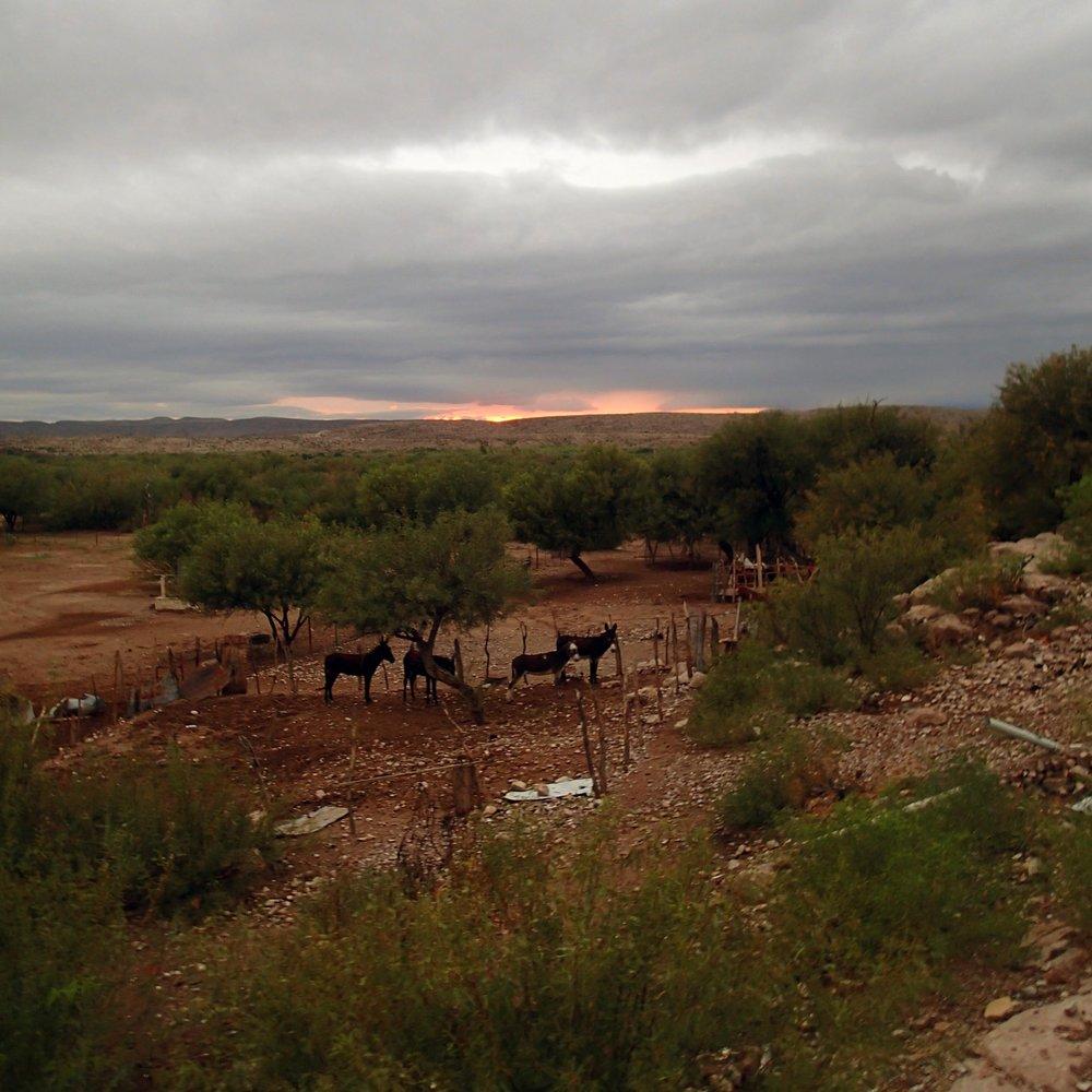 burro sunset.jpg