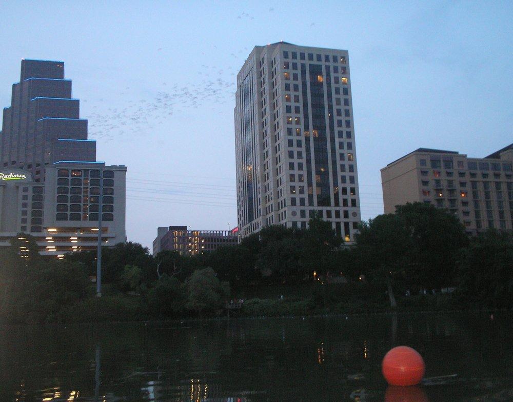 more bats.jpg