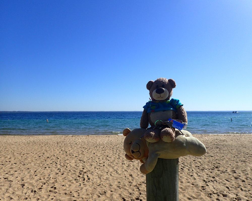bearbies at Grand Traverse Bay.jpg