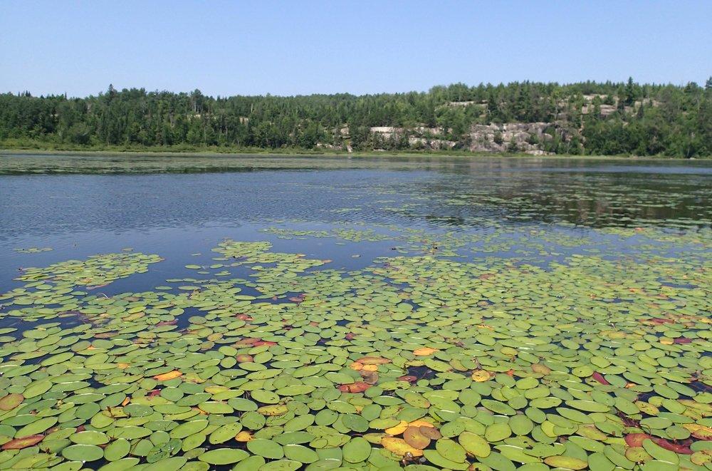 lily pond 7-21-14.jpg